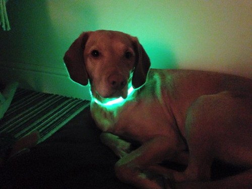 Light up Dog Collar for Runners